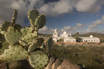 Tucson: Mission San Xavier del Bac Mission with Cactus by Danita Delimont