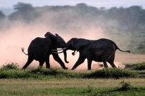 Elephants von Danita Delimont