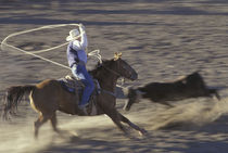 Big Timber Cowboy rides horse in calf-roping rodeo competition (motion) by Danita Delimont