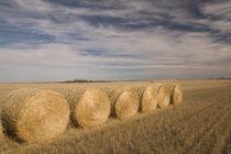 Craik: Hayrolls / Autumn and Prairie Landscape von Danita Delimont