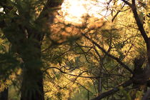 Sonne von Lisa Schneider