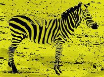 Zebra01 by corsza