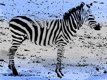 Zebra02 by corsza