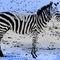 Zebra02