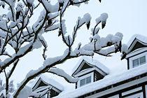 Schnee von Daniela  Bergmann