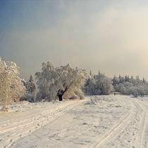 Warm white  von Tom Lemisiewicz