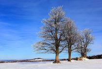 Vereiste Bäume by Wolfgang Dufner