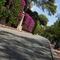 Oceanographic-museum-gardens-monaco-3
