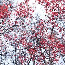 canopy trees by Priska  Wettstein