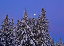Winter Blue Moon by Michele Cornelius