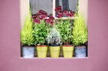 Window sill flowers by Albert Lusby