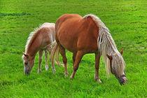 Pferde by Wolfgang Dufner