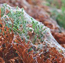 Cobwebs by Sally Hall