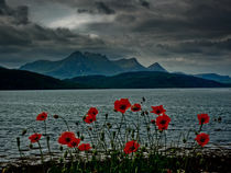 Ben Loyal In Bloom von Derek Beattie