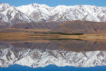 Lake Heron Reflections by Geoff Bryant