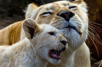 White Lion love me by David Freeman