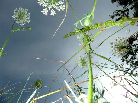Flower-flakes-25