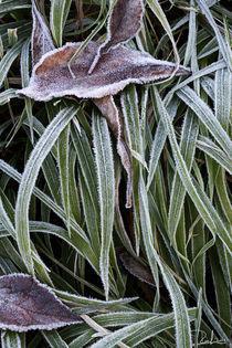 Frozen von Raffaella Lunelli