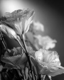 Third flower by Vito Magnanini