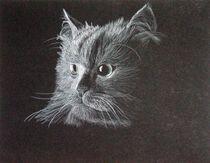 Cat on Black by Brandy House