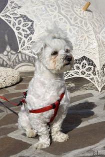 Guardian of the umbrellas 2 von Raffaella Lunelli