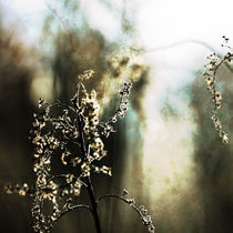 winter light #2 by Eva Stadler