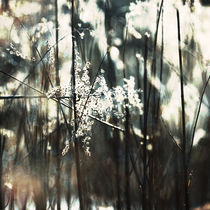 winter light #1 von Eva Stadler