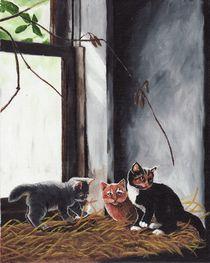Kittens-playing