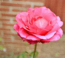 Zazzle-pink-promise2