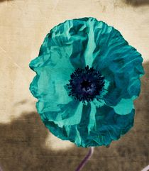 Teal Poppy by Patricia N