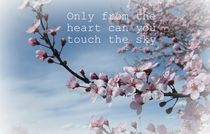 Touch the Sky Cherry Blosoom von Patricia N