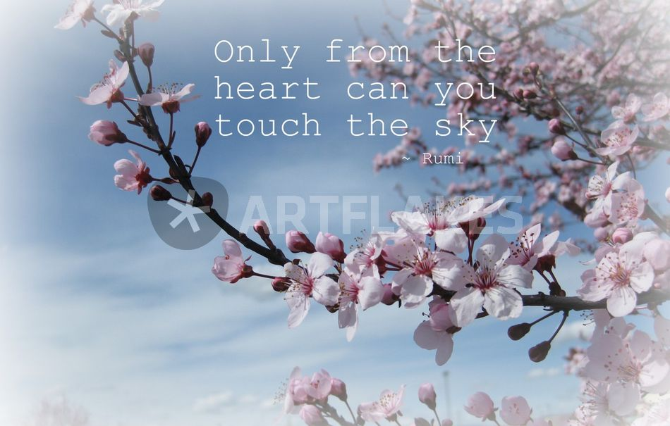 """Touch The Sky Cherry Blosoom"" Photography Art Prints And"