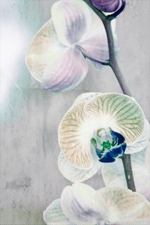 Painted Orchid by Patricia N
