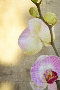 Pretty Orchid by Patricia N
