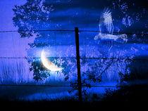 Night Hunter by Robert Ball