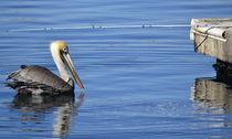 Pelican Versus Pole by Fraida Gutovich