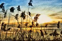 Wind in the reeds von and979