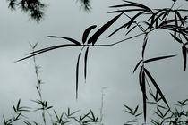 bamboo von Vsevolod  Vlasenko
