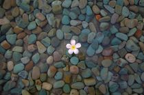 Frangipani and stones by Vsevolod  Vlasenko