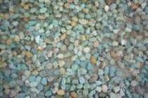 color stones by Vsevolod  Vlasenko
