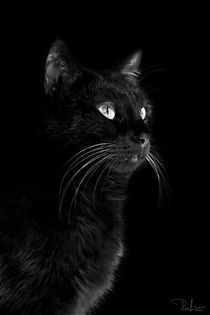 Ral-raffaellalunelli-cat-nero-fierobn-ok
