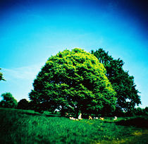 TREES by Giorgio Giussani
