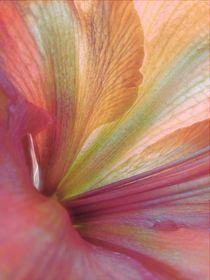 Blütenstruktur von claudiag