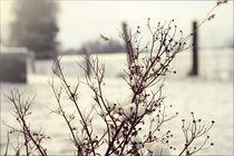 White Dream by Janina Fremke