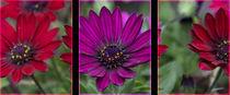 Flower montage von Daniel Payne
