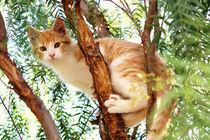 Tom-im-pfefferbaum
