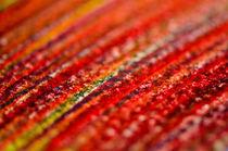 The fields of red by Srinivasan Ramakrishnan