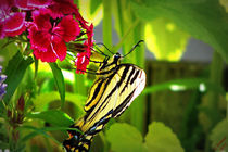Swallowtail Profile by Christi Ann Kuhner