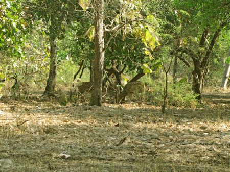 Forest-jungle-deer