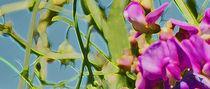 Blooming von rica